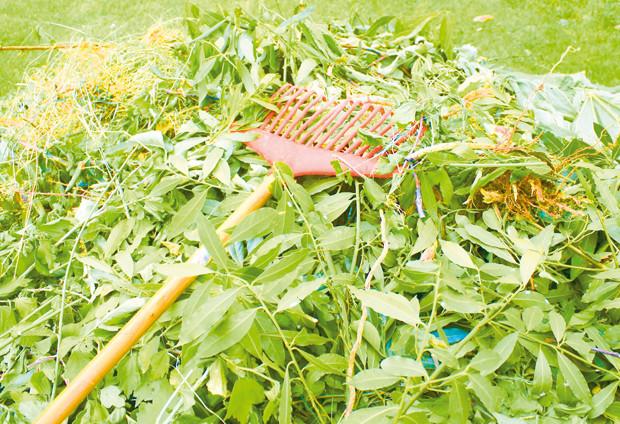 D chets verts propret publique cadre de vie lomme for Piscine de lomme